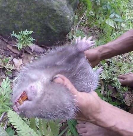 این مرد 40 سال است که موش می خورد! +عکس